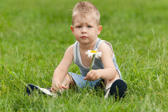 The thoughtful boy with a camomile Royalty Free Stock Photo