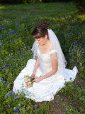 Thoughtful bride in bluebonnet field. A woman with dark hair in a wedding gown holds a bouquet Stock Images