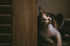 Thoughtful cat Royalty Free Stock Images
