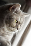 Thoughtful Cat Royalty Free Stock Photography