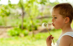 Thoughtful Dandelion Royalty Free Stock Image
