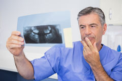 Thoughtful dentist studying x-ray attentively Royalty Free Stock Images