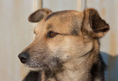 Thoughtful dog Stock Photos