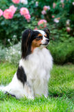 Thoughtful dog in the garden Royalty Free Stock Images