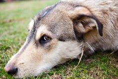 Thoughtful dog royalty free stock photography