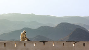 Thoughtful Indian Monkey. A monkey sits on top of a wall in udaipur monsoon palace Stock Photo