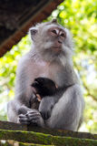 Thoughtful monkey with a baby Royalty Free Stock Photos