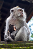 Thoughtful monkey with a baby Royalty Free Stock Photography