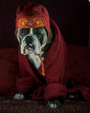 A thoughtful Tibetan Buddhism dog Royalty Free Stock Photo