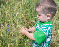 Thoughtful toddler in the field of wheat Royalty Free Stock Photography