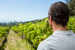 Thoughtful vintner standing in vineyard. On a sunny day Royalty Free Stock Image