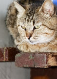 Thoughts of rustic cat Royalty Free Stock Images