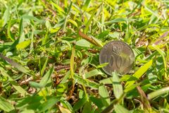 Rupiah coin money on green grass. Thousand Indonesia Rupiah coin money on green grass Background Morning Royalty Free Stock Photography