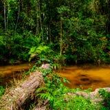 Thousand lingas river. Siem Reap. Cambodia Stock Image