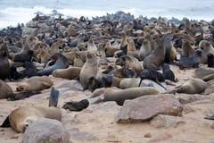 Seal colony, Namibia Royalty Free Stock Photos