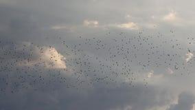 thousands of birds fly across the spring sky