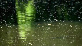 Thousands of bugs and insect swarming frantically over canal water