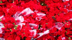 Thousands carnation flowers. Texture from thousands carnation flowers stock video