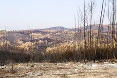 Vila de Rei Forest Fires Royalty Free Stock Images