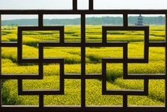Free Thousands Of Acres Of Rapeseed Field Outside The Window Royalty Free Stock Images - 159835419