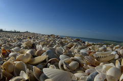 Thousands of shells. Line the beach by the ocean Royalty Free Stock Images