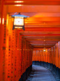 Thousands of vermilion torii gates Royalty Free Stock Images