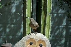 Thrasher carrying material for  nest. On its beak Stock Image