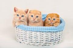 Thre cute little kittens stock photo