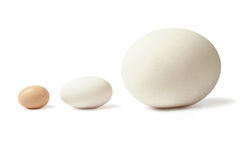 Thre eggs lined Royalty Free Stock Images