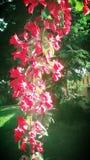Thread der d-Blumen Lizenzfreies Stockbild