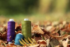 Thread spools arranged in autumn leaves. Background blanked out blurry Stock Images