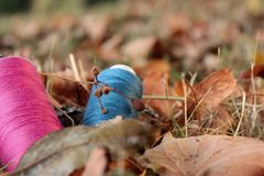 Thread spools arranged on meadow with autumn leaves. Background blanked out blurry Stock Photo