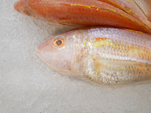Threadfin Bream on ice Stock Images