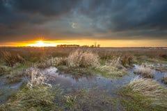 Threatening dark sky over swamp area during sunset Royalty Free Stock Photos