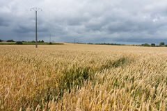 Threatening sky over a cornfield in France Stock Photo