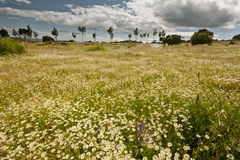 Threatening sky and spring landscape. Stock Images