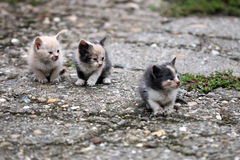 Three abandoned kittens Stock Images