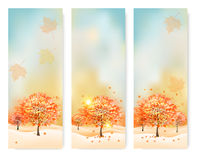 Three abstract autumn banners with color leaves. Stock Photography