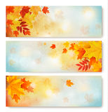 Three abstract autumn banners with color leaves. Royalty Free Stock Image