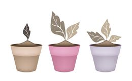 Three Abstract Brown Trees in Flower Pots Royalty Free Stock Photography
