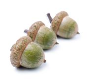 Three acorns Stock Photos
