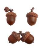 Three acorns Stock Images