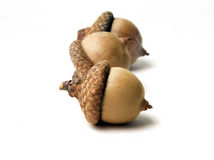 Three Acorns Royalty Free Stock Photography