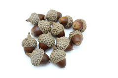 Three acorns on a white. Autumn browns acorns close up  isolated on a white background Stock Photo