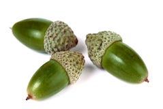 Three acorns on white background Royalty Free Stock Photos