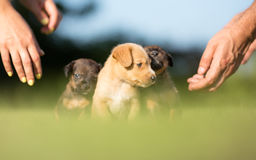 Three adopted dogs. In new garden Royalty Free Stock Photography