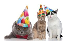 Three adorable cats on a birthday party