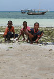 Three African boys harvested sea animals in the surf zone. Stock Photos