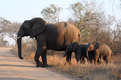 Three african elephants Stock Photo