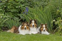 Three Amigos Royalty Free Stock Photos